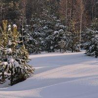 Февральский лес :: Татьяна Соловьева