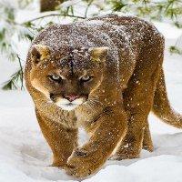 Хозяйка зимы :: Valentina Ariel