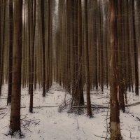 мистический лес :: Дмитрий Булатов