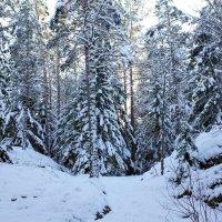Сегодня мы прощаемся с зимой :: Swetlana V