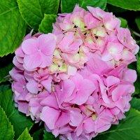 Ароматы — это чувства цветов... :: Mari Kush