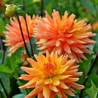 Трепетный изнеженный цветок... :: Mari Kush