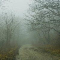 В тумане :: Олег