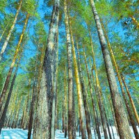 Поход в лес :: Сергей Алексеев