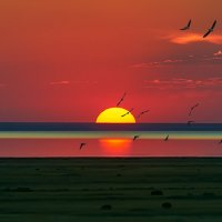 Закат над Эльтоном с птичками :: Александр Елизаров
