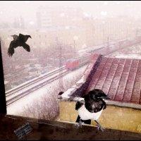В городе снег. :: Григорий Кучушев
