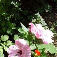 Розовые цветочки :: Дмитрий Никитин
