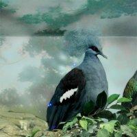 Венценосный голубь :: Елена Назарова