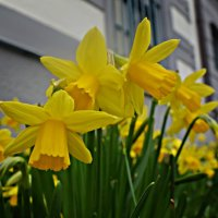 Весны Вашему сердцу! Тепла Вашей душе!! :: Galina Dzubina