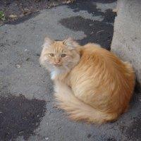 С днем кошек! :: Елизавета Успенская