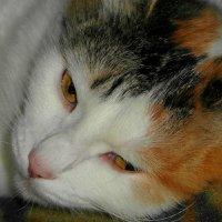 Сегодня кошек поздравляем. :: nadyasilyuk Вознюк