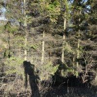 Лесные тайны :: Sony 2 Sony 2