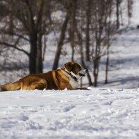 Пёс :: Александр
