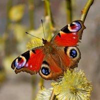 Бабочка присела... :: Mari Kush