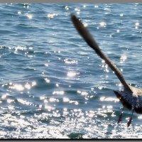Блики  солнца  на  воде.  Море. :: Ivana
