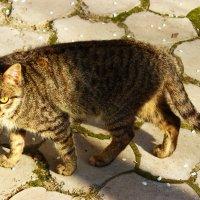 С днем кошек! :: Светлана