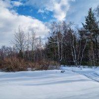 Дорога в лес :: Андрей Дворников