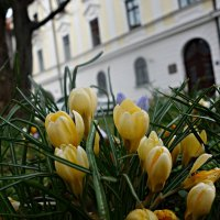 Весеннее настроение... :: Galina Dzubina