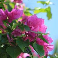 цветение :: Ольга Седых