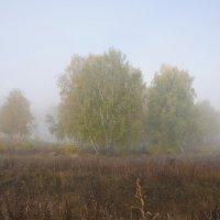 Березы в утреннем тумане. Осень. :: Сергей Тагиров