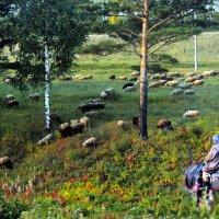 Утро! :: Андрей Генинг.