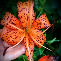 Просто цветок :: Inessa Inessa