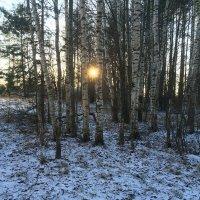 Снежок в декабре :: Наталья