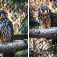 В зоопарке :: Алина Репко
