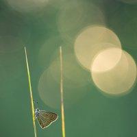Флажок. :: Андрей Ветров