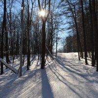 Зимняя дорожка :: Наталья Тагирова