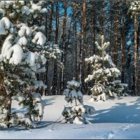 Утро после снегопада :: Александр Лихачёв