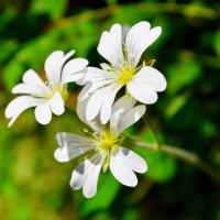 Цветик-самоцветик :: Виктор Шандыбин