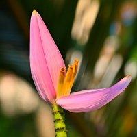 Цветы Таиланда :: Дмитрий Боргер