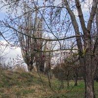 Идет Весна! :: Варвара