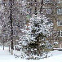 1 марта , снегопад . :: Мила Бовкун