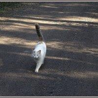 Кошка на дорожке :: Вера