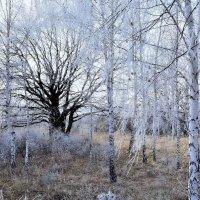 Зимний бал :: Мария Богуславская