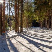 Мартовская лыжня :: Дмитрий Гордиенко