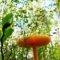 лесной грибочек :: Александра Полякова-Костова