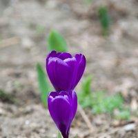 Весна :: Елена Нор
