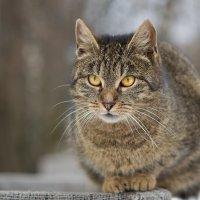 Уличный кот :: Лена Рихтер