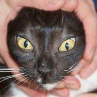 Коты :: Юрий Плеханов