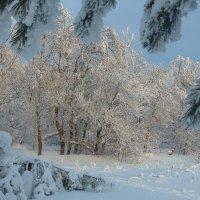 Волшебный лес :: Марионэлла Сигнаевская