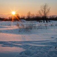 Предчувствие весны... :: Сергей Щелкунов