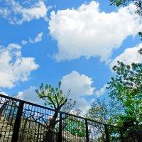 облака :: Люша