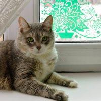 мой котяра :3 :: Alina Mazitova