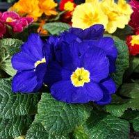 Краски грядущей весны... :: Galina Dzubina