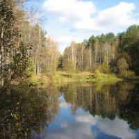 Лесное озеро :: Cергей Скотников