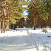 В последний день февраля. :: Мила Бовкун