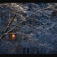 опять зима :: Елена Ерошевич